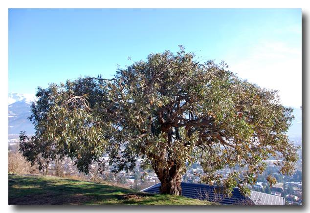 baobab elagage l 39 arbre du moment. Black Bedroom Furniture Sets. Home Design Ideas